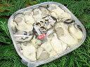 瀬戸内海産・お刺身生牡蠣