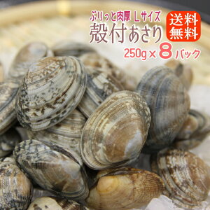 ボイル殻付あさり 砂抜き済み 250gx8パック(2kg分) 送料無料濃厚で美味しい ボイルしてるから温めるだけ250gずつのパックで使いやすくて保存に便利!アサリ あさり
