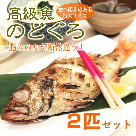 【高級魚 のどぐろ 丸ごと】300-400g 約28cm級の特大サイズ2匹セット(ウロコ・内臓処理済)【お祝い事におすすめ】あす楽 ノドグロ のど黒 赤ムツ 赤むつ