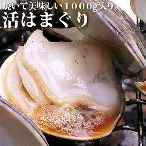 【業務用】<活きはまぐり(ハマグリ・蛤)1kg>お吸い物、酒蒸し、天ぷらに!【冷凍便同梱可】【ギフト】【お中元ギフト】