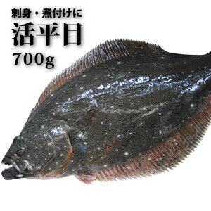 <活きひらめ1尾700g(ヒラメ/平目)>激安!お刺身で!【鮮魚】【冷凍便同梱可】