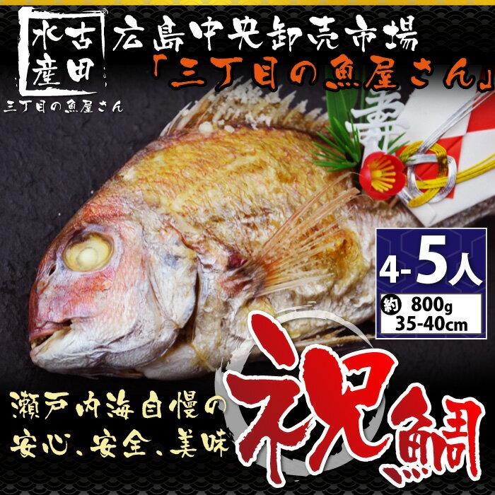 【お食い初め】魚屋さんのお祝い天然焼き鯛800g(4〜5人分)(冷蔵便)[メール便:不可]