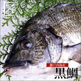 【瀬戸内産】三丁目の黒鯛/チヌ(冷蔵便)[メール便:不可]