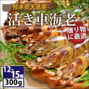 【熊本県天草産の車海老】活き車エビ300g(12-15尾)(冷蔵便もしくは常温便)[メール便・代引き:不可] 8月13日から8月16日は出荷がお休みです。