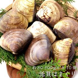 活貝はまぐり約80-100gが8-10個(冷蔵便)[メール便:不可]※入荷状況によって粒が小さい場合は800g分にさせていただきます。
