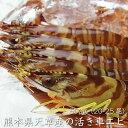 【送料無料】天草産 活き車エビ 500g(20-25尾)熊本県 (冷蔵便もしくは常温便)