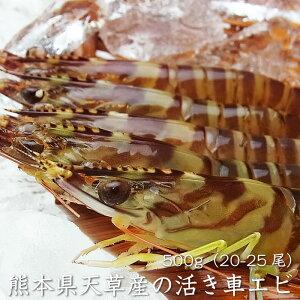 【送料無料】天草産 活き車エビ 500g(20-25尾)熊本県 冷蔵便 常温便 活き車海老 えび いきたまま 活 贈答 くるまえび 生 ご当地 グルメ 贈り物 お祝い お取り寄せ