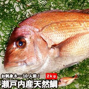 瀬戸内海産 活〆 天然鯛《2.0kg》お食い初めや神事などにもお使い頂ける美しい真鯛です。神事用には「氷〆」で刺傷なしの美しいままの鯛をどうぞ!ピンク色で綺麗な鯛は神事、仏事、など