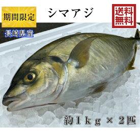 期間限定 シマアジ 約1kg×2匹 送料無料調理しやすいように内臓を取り除いて発送します シマアジ 鯵 アジ しまあじ 青空レストラン