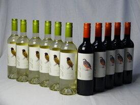 チリ白赤ワイン11本セット デル・スール カルメネール ミディアムボディ5本 デルスール ソーヴィニヨン ブラン 辛口6本 750ml×11本