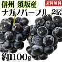 信州須坂(すざか)産ナガノパープル 2房セット 約1100g(1.1kg) 【予約受付中】【送料無料】