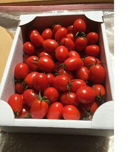 ミニトマト「あまっこ」2キロ箱詰め送料無料