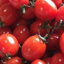 ミニトマト「あまっこ」1キロ送料無料