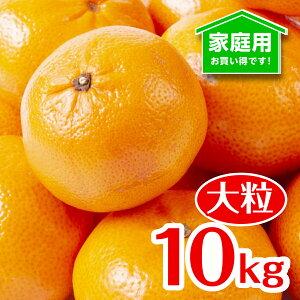 [送料無料][あす楽]和歌山県産 みかん(大粒L〜LL )完熟 産地直送 甘い フルーツマイスターが選別 (10kg)