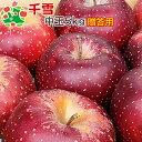 【即日出荷】 りんご 千雪 特選 中玉 青森県産 ギフト 贈答用 5kg