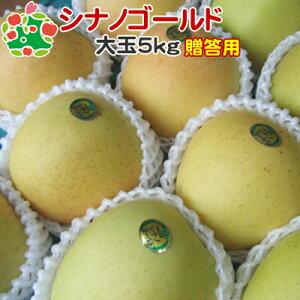 【CA貯蔵】 りんご シナノゴールド 特選 大玉 青森県産 ギフト 贈答用 5kg