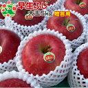 【即日出荷】 りんご 早生ふじ 特選 大玉 青森県産 ギフト 贈答用 5kg