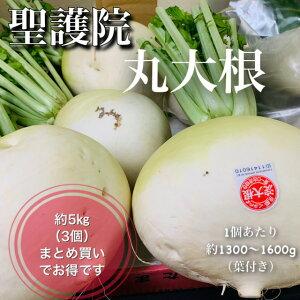 【冬季限定】京都産 聖護院丸大根 Mサイズ3個(葉付き1個あたり約1300〜1600g) 3個まとめてお得価格!※1個販売の商品ページもございます※