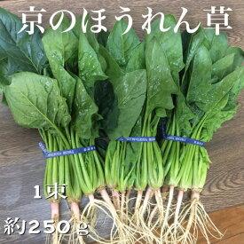 【冬季限定・京やさい】京都産 ほうれん草 1束あたり約250g※※購入数は1〜7束の間でお選びください※※