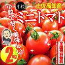 【送料無料】 プチトマト約2kg高知のミニトマト沖縄県と北海道と離島は、別途1000円配送料がかかります。