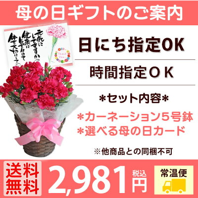 母の日ギフトカーネーション5号鉢植えメッセージカード付日にち指定OK!母の日プレゼント花5号鉢鉢花Mother'sDay/送料無料
