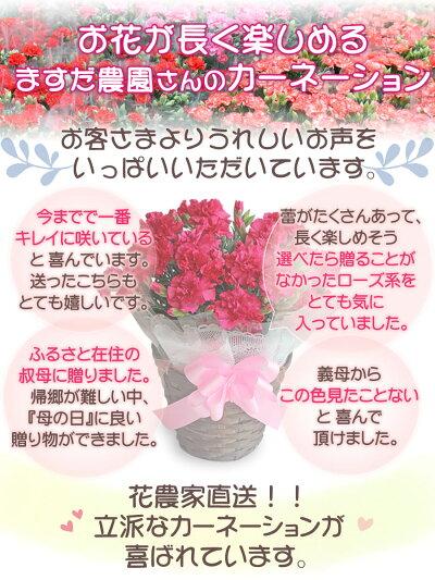母の日ギフトカーネーション鉢植え5号メッセージカード付送料無料日付指定可プレゼント花5号鉢鉢花Mother'sDay