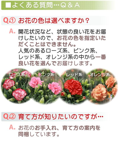 開花状況など一番良いものを選んでお届けします。