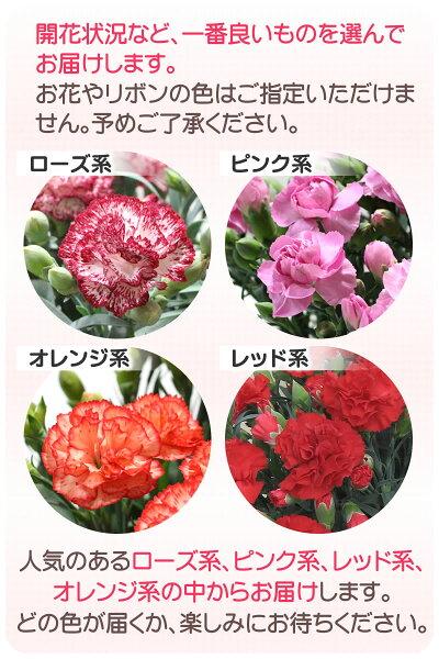 開花状況など、一番良いお花を選んでお届けします