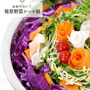 【楽天市場限定】おめでたい! 発芽野菜 ケーキ 鍋(3−4人前キット)