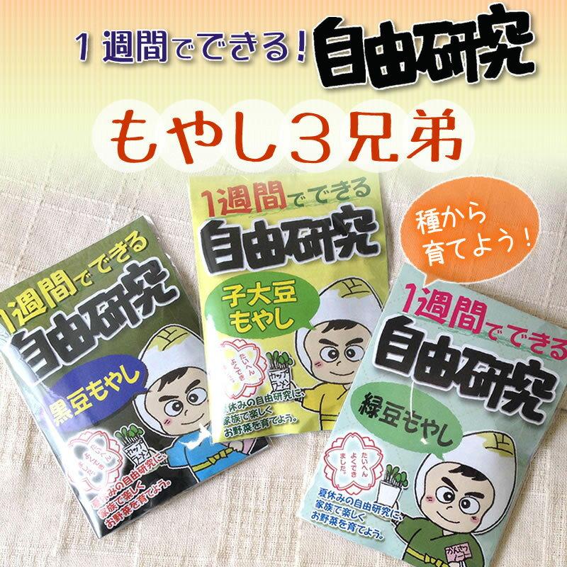 もやし3兄弟を種から育てよう!【送料無料】緑豆/子大豆/黒豆