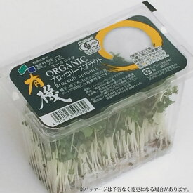 有機 オーガニックブロッコリーの新芽(ブロッコリースプラウト) 1パック