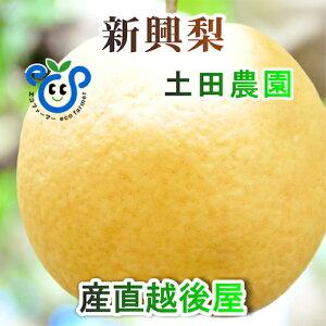 【フルーツ 梨 和梨 新興】新潟県 エコファーマー認定農園 土田農園 有機栽培 新興梨 贈答用 10kg(14個〜18個)樹上完熟梨【なし 贈答品 プレゼント】