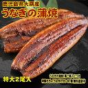 特大サイズ 2尾入り 1尾200グラム 鹿児島県 大隅産 国産 税込 送料無料 うなぎの蒲焼 鰻