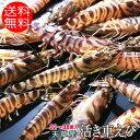 熊本県天草産 1キロ 大サイズ 32〜38尾入り 活き 車えび