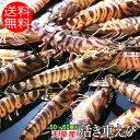 熊本県 天草産 1キロ 中サイズ 50〜60尾入り 活き 車えび