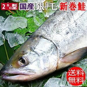 特選 国産 化粧箱入り 銀毛 新巻鮭 2キロ型