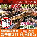 【熊本県天草特産】活き車えび1キロ(32〜38尾入り)