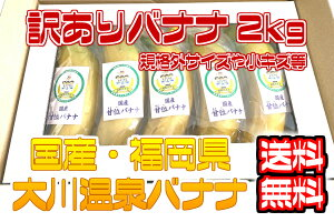 【国産温泉バナナ】訳あり2kg 大川温泉フルボ酸源泉栽培 甘位バナナ