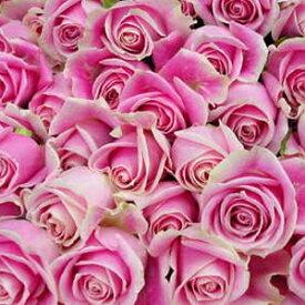 2020年4月【月間優良ショップ受賞】ピンクバラ【本数指定でピンクバラの花束】一本 価格 販売 【生花】 販売【花】誕生日 記念日 プロポーズ キャバ嬢プレゼント 可愛い 花束 お礼 花びらをお風呂に お花 お祝い【楽ギフ_包装】【楽ギフ_メッセ入力】