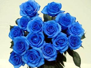 2020年4月【月間優良ショップ受賞】ベンデラブルー 青いバラ 1本 価格 一本 生花 誕生日の花/新築祝い/開店祝い/お見舞い【結婚祝い】【誕生日】【花】【楽ギフ_包装】プレゼン