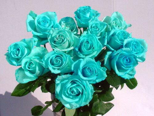 """""""アイスブルー""""青いバラ 青バラ 生花 誕生日の花/新築祝い/開店祝い/お見舞い【結婚祝い】【誕生日】【花】【楽ギフ_包装】【楽ギフ_メッセ入力】プレゼントに 青い薔薇 青いバラ 青バラ"""
