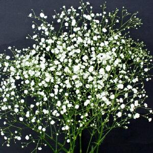 白小花(白小花も入れる!!1本3L)(かすみ草・カスミ草・スターチース)