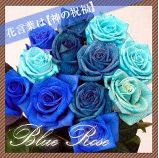 青バラ種類色3種類