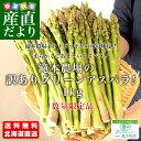 送料無料 北海道より産地直送 赤井川村滝本農場のJAS有機認定グリーンアスパラ 規格外  約1キロ