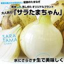 熊本県より産地直送 JAあしきた サラたまちゃん LAサイズ 10キロ  30玉前後 玉葱 タマネギ