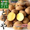 送料無料 北海道から産地直送 JAとうや湖 じゃがいも 湖ばれいしょ「とうや」 Lサイズ10キロ 馬鈴薯 バレイショ