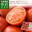 送料無料 茨城県より産地直送 NKKアグリドリーム スーパーフルーツトマト 9度+ A品 約1キロ (8から16玉) 高糖度トマト
