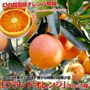愛媛県より産地直送 JAえひめ南 ブラッドオレンジ(タロッコ種) M〜Lサイズ 優品 5キロ(約35玉)