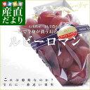 石川県産 JA全農いしかわ ルビーロマン 秀品 500g以上 1房化粧箱 市場発送
