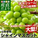山梨県産 シャインマスカット 約2キロ(3から4房) (JAふえふき、JAこま野等) 市場発送 ぶどう 葡萄 ブドウ